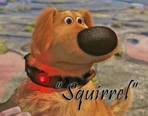 Dug-squirrel